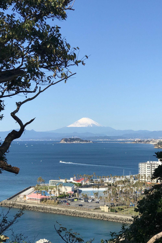 大崎公園からの景色