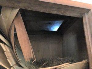 軒裏に鳥の巣が!